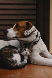 How to Reduce Pet Expenses